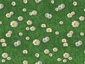 ExpoLook Flowered Grass
